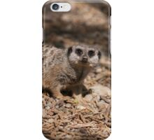 meerkat in the forest iPhone Case/Skin