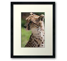 cheetah in the jungle Framed Print