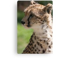 cheetah in the jungle Canvas Print