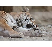 tiger in the jungla Photographic Print