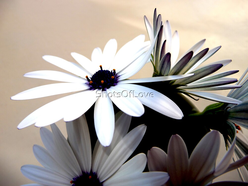 A Little White Bunch by ShotsOfLove