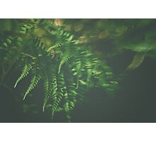 The Understory Photographic Print