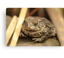 Sleepy Frog Canvas Print