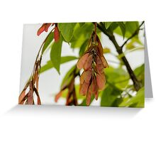Helicopter Seeds Greeting Card