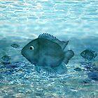 Blue fish... by nishagandhi
