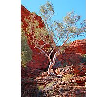 Ghost Gum, Kings Canyon, Northern Territory, Australia Photographic Print