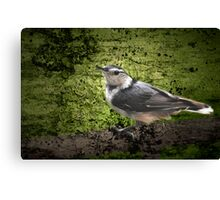 Textured Nuthatch Canvas Print