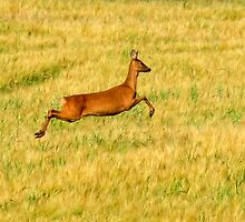 Deer in Wheatfield by dsargent