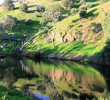 Onkaparinga  National Park, Old Noarlunga, S.A. by elphonline
