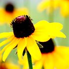 Black Eye Susan by bobbic