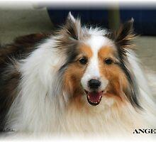 Angel by Judy Gayle Waller