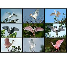 Whole Lotta Flapping Going On! Photographic Print