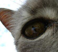 in a cat's eye by armadillozenith