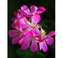 attar of rose Photographic Print
