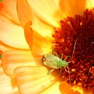 Insect on flower by DIANE  FIFIELD