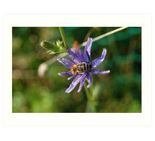 Beautiful Bee Art Print