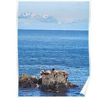 Sea Lions of Alaska Poster
