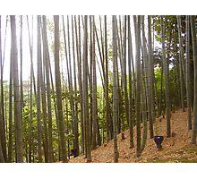 Bamboo at Kyoto Photographic Print