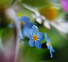 Forget-Me-Not between flowers (from wild flowers collection)  by Antanas