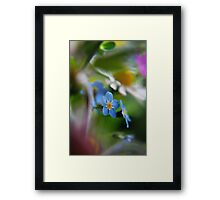 Forget-Me-Not between flowers (from wild flowers collection)  Framed Print