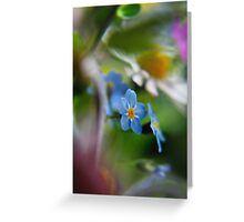Forget-Me-Not between flowers (from wild flowers collection)  Greeting Card