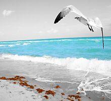 Seagull in Flight by Yimy Chirinos