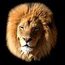 Lion by Brad Sumner