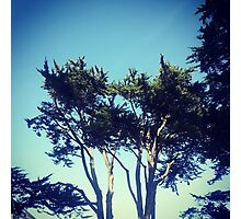 Beach Trees Photographic Print