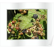 Nature's Berry Fruits Poster