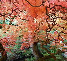 Autumn at Butchart Gardens by Mikeinbc1