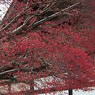 Stunning foliage in Japan  by icesrun