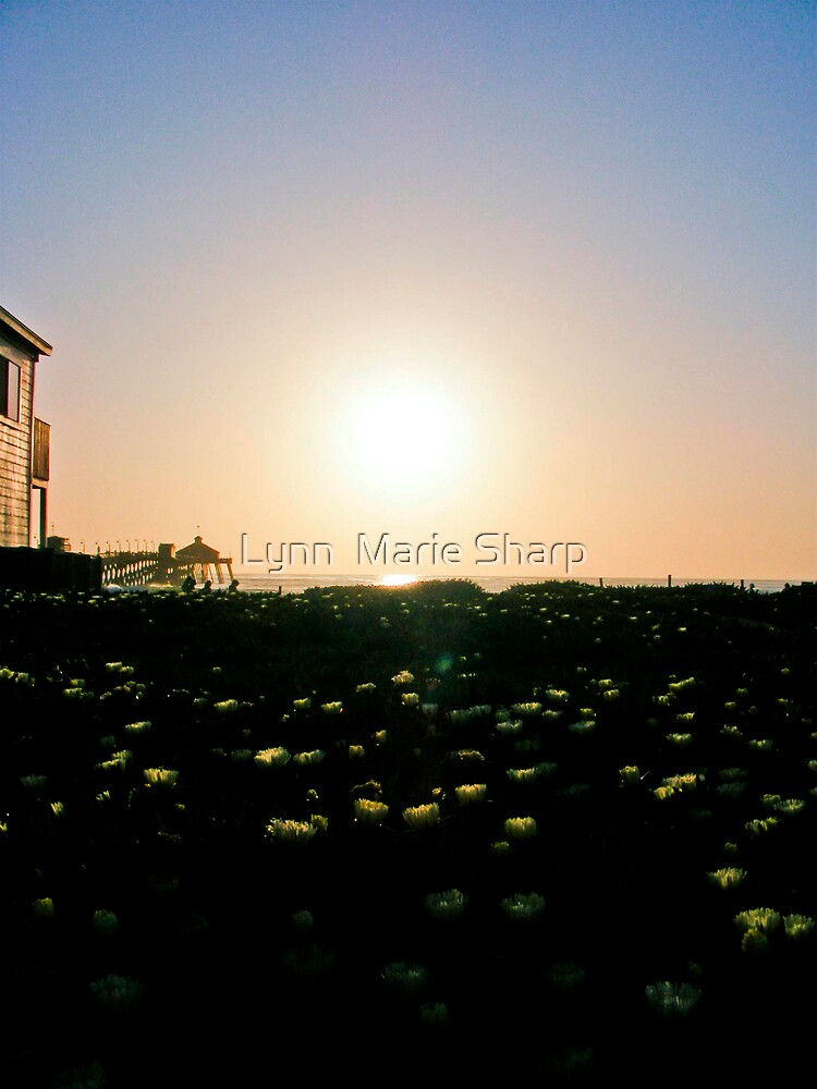 Last Bit of Sunlight by Marie Sharp