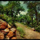 Madera Canyon  by Barbara Manis