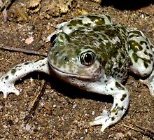 Unbelievable Spadefoot Toad