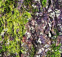 Moss by CreativeLore