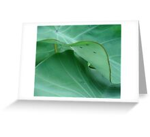 Elephant ears with ants Greeting Card
