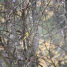 Hide little birdie...  by Linda Costello Hinchey