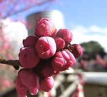 Ume Boshe Flowers by largo
