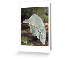 Morning Gum Leaf Greeting Card