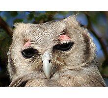 GIANT or Verreaux Eagle Owl -  Bubo lacteus Photographic Print