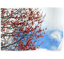 Red, White and Blue in Nature Poster