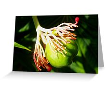 Hula dancing flower pod Greeting Card