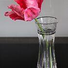 Single Beauty by vbk70