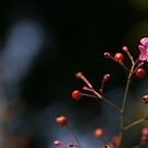 Wild Flower by ChauTW