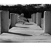 Private Pelican - Sussex Inlet, New South Wales Photographic Print