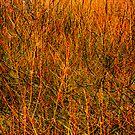 'bush strokes' by Bruce  Dickson