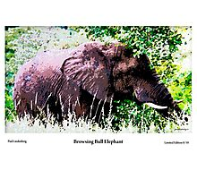 Limited Edition Prints - Fauna Photographic Print