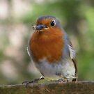 Little Robin by ElsT