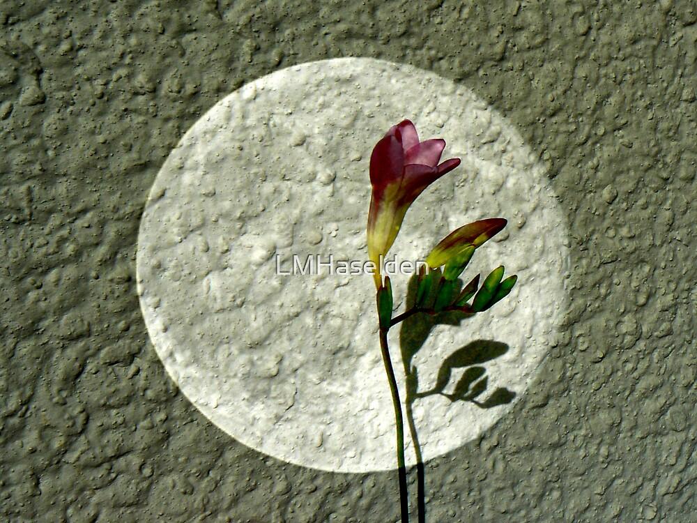 Spotlight on Spring by Lynne Haselden