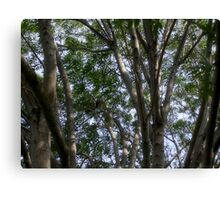 A Study of Light and Shadow: Trees, Foliage and Sky Canvas Print